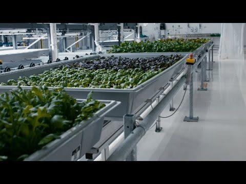 This high-tech farm grows veggies in a warehouse