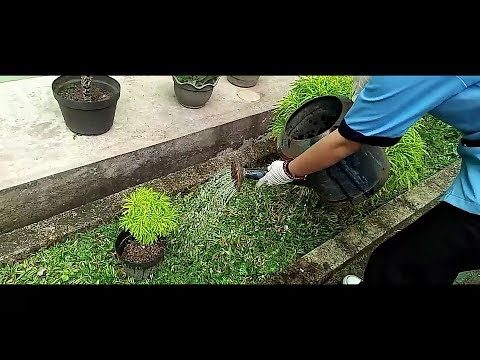 Job Description of Gardener in Hotel (Tutorial)