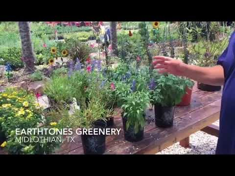 Learn to build a Butterfly Garden
