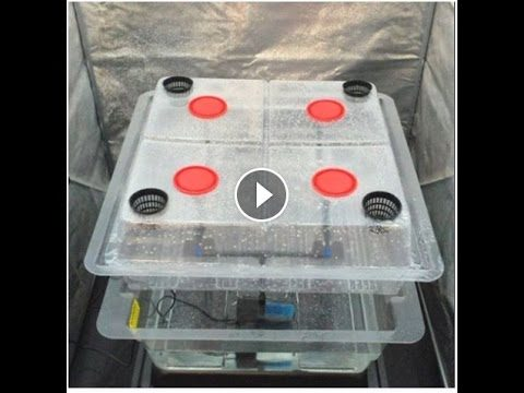 Amazon Aeroponics System – Hg Hydroponics