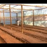 Advantages of Greenhouse farming – Low cost greenhouse farming