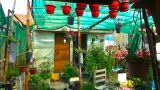 729# Garden Overview of February |  Vegetable Gardening kron ya Horticulture Gardening