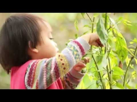 English Song for Kid – Chíp Garden