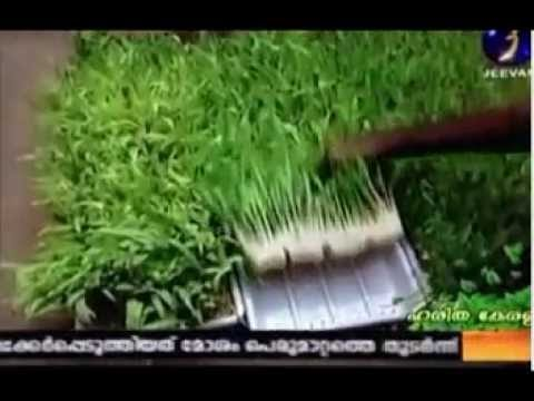 Greentech Hydroponics Fodder Machine