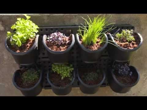 The Garden Gurus – Holman Greenwall
