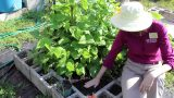 Caring for your Raised Bed Vegetable Garden- Seeding & Transplants