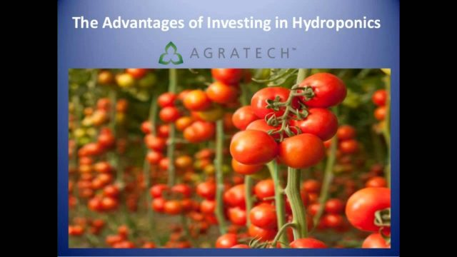 Advantages of Investing in Hydroponics