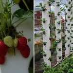 Believe It Or Not, This Tower Can Grow Tons Of Strawberries At Home