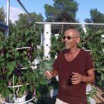Aeroponic aubergines using Tower Garden technology at Ibiza Farm.