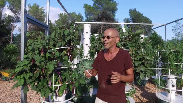 Aeroponic aubergines using Tower Garden technology at Ibiza Farm.