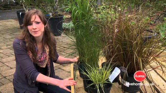 Gardening – Creating a indestructible garden (to withstand extreme weather, pets and children)