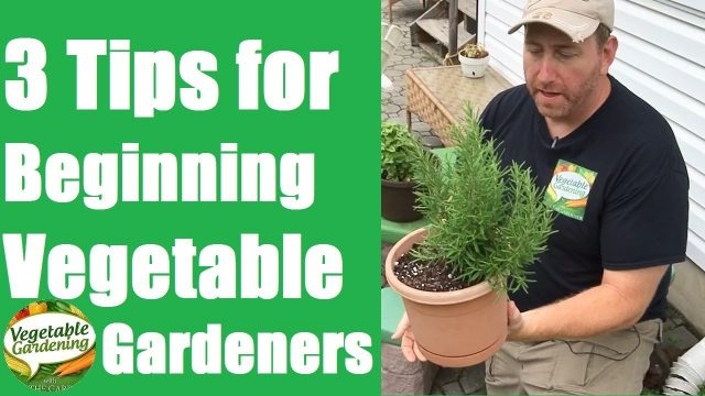 Vegetable Gardening for Beginners – 3 Tips for Beginning Vegetable Gardeners