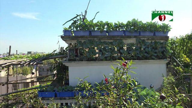 Rooftop farming || EPISODE 72 || HD || Shykh Seraj || Channel i || Roof Gardening || ছাদকৃষি ||