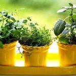 The 8 Easiest Herbs To Grow Indoors – Indoor Gardening