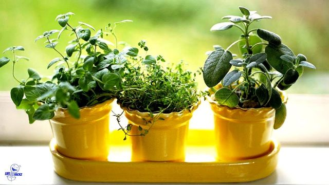 The 8 Easiest Herbs To Grow Indoors – Indoor Gardening