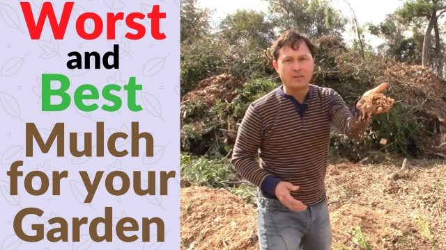Worst and Best Wood Chip Mulch for Your Vegetable Garden