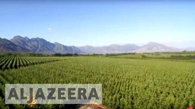 earthrise – Food: Farming for the Future – earthrise