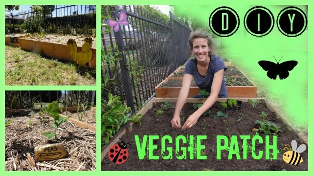 DIY backyard VEGETABLE GARDEN for beginners