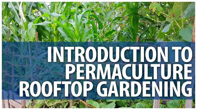 Introduction to Permaculture Rooftop Gardening Classes – FULL Day Sessions