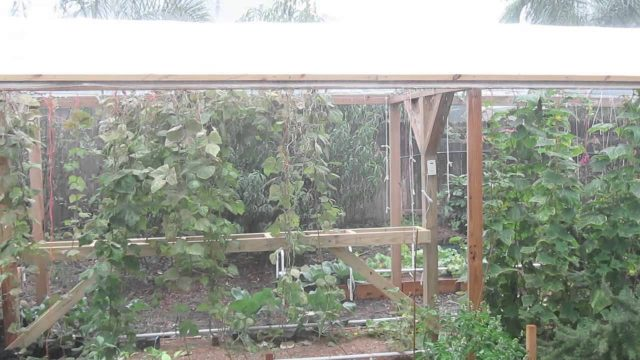 How To Protect Your Garden From Heavy Rain Storms