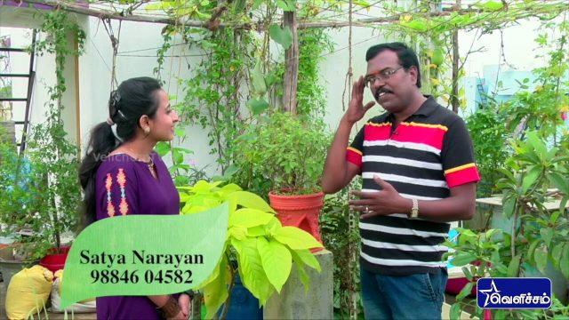 En Veetu Thottathil |Terrace-and-Roof Gardening | Sathya Narayan – Terrace Gardening | Velicham Tv