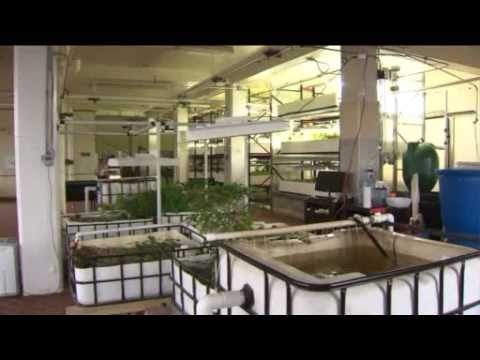 "WGN TV, ""312 Aquaponics growing produce in a new way"""