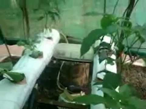 hydrophonics in india