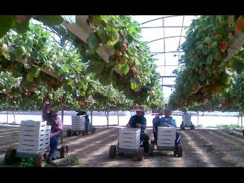Israel Agriculture Technology, Smart Farming – Agriculture in the Desert
