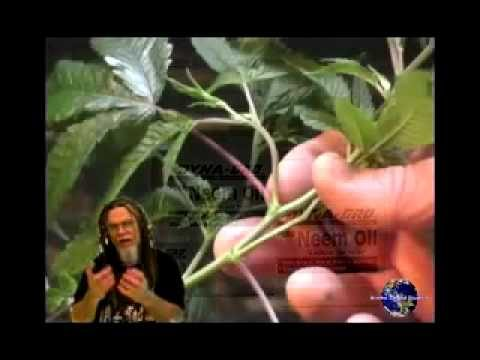 how to grow weed hydroponically indoors part 1
