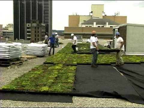 Green Roof on Dayton's City Hall