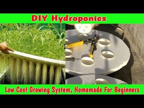 Low Cost Hydroponics Growing System,  Homemade For Beginners
