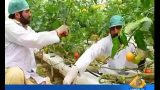 First indigenous hydroponic system in Pakistan: Capital TV