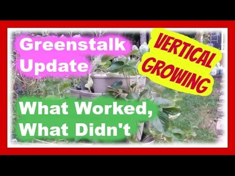 Greenstalk Update Vertical Growing – What Worked and What Didn't
