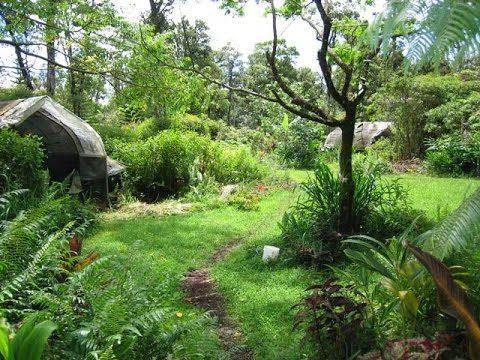 L'évolution d'un jardin permaculture et les associations #permaculture #agroecologie