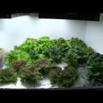 Final Update on The Hydroponic Setup