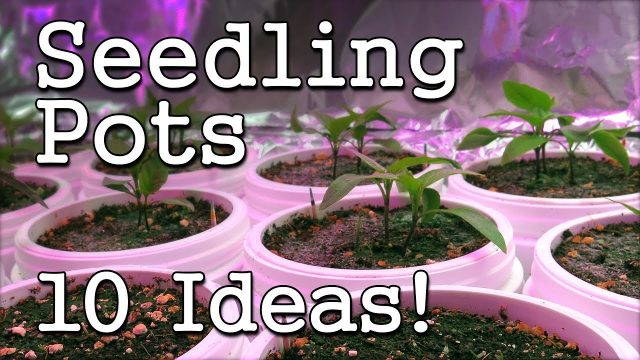 Seed Starting Containers: 10+ Ideas for Vegetable Gardening -Quick Tips