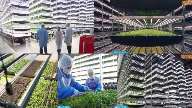 Unbelievable High Technology Used in Indoor Farming! Vertical Farming Can Be an Inside Job! WATCH