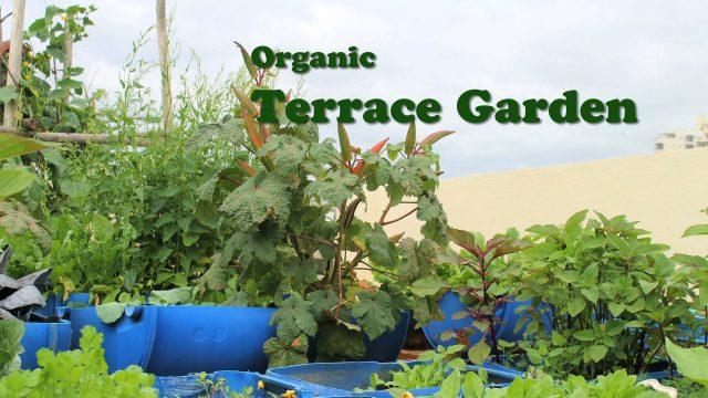 Organic Terrace Garden – English