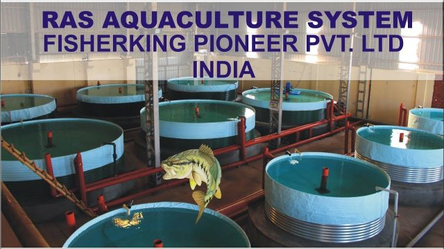 RAS INDOOR FISH FARMING INDIA  – FISHER KING PIONEER LTD.