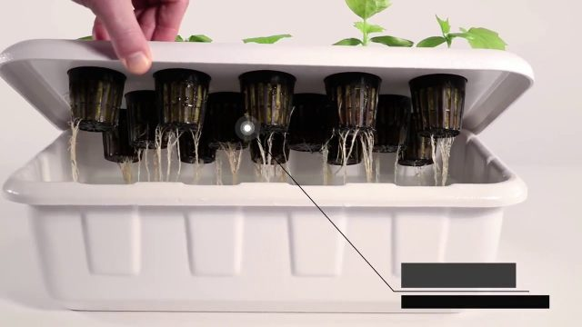 Best Hydroponic System | Supercloner 14 | Clone and Germinate