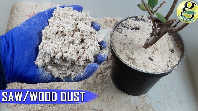 SAW DUST (WOOD DUST) For Plants and Gardening | The NITROGEN STEALING CONCEPT & Hacks