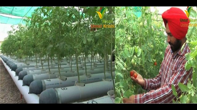 Best Hydroponic system in nominal cost | Made in Young Punjabi farmer