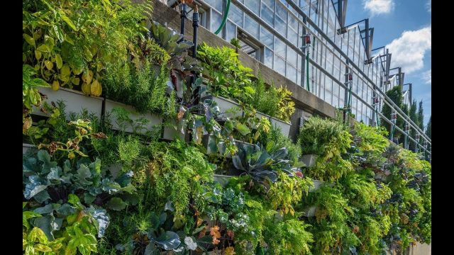 Phipps Conservatory Production Greenhouse Living Walls – Project of the Week 11/20/17
