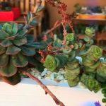 Living vertical Succulent garden