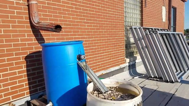 Rain barrel bee watering station Plant Chicago