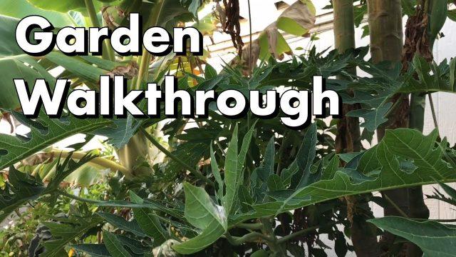 One Arizona Garden   Garden Walkthrough ~ August 26, 2017
