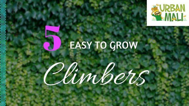 5 Easy To Grow Climbers! – UrbanMali.com