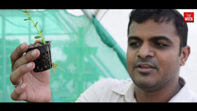 Hydroponics: The Future of Farming