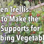 Garden Trellis – How to Make the Best Supports for Climbing Vegetables
