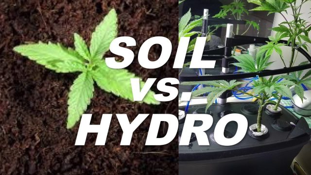 Soil vs Hydro – What's the best way to grow weed? by Cannabis Frontier